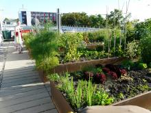 Gemüsebeete auf dem Dach